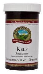 Бурая водоросль Келп (Kelp)