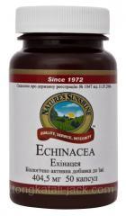 Ехінацея (Echinacea)