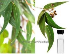 Eucalyptus essential oil of an eucalyptus