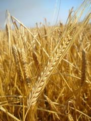 Grain fodder wholesale on the most favorable