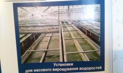 Хлорела для рибного господарства від виробника -