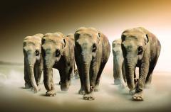 """Флизелиновые Фотообои """"Слоны"""","""