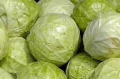 Cabbage from the producer. Grade of an ankom,