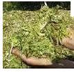 Биокорма для сельскохозяйственных животных
