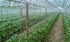 Сетка пластиковая шпалерная для огурцов и др. вьющихся растений