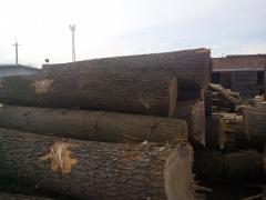 Sawlog oak +26 (round timber)