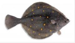 Flounder fresh-frozen