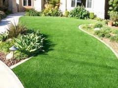 Семена газонных трав, трава