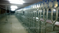 Pig breeding equipment