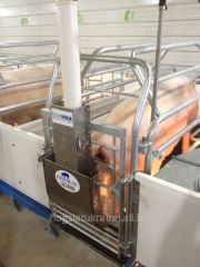Feeding troughs for pigs