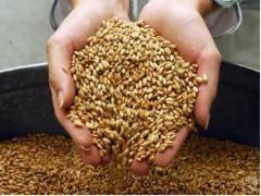 Производство кормов для животных