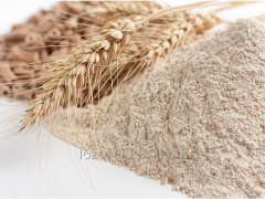 Cereal crops, grains