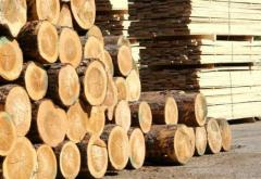 Sawn timber is svezhepilenny, tree, the wood round