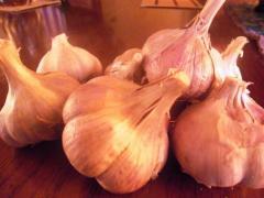"""Garlic grade """"Sofiyevsky"""