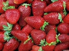 Strawberry wholesale
