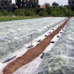Agrofibre (agro spanbond)