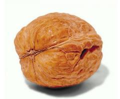 Walnut. To buy a walnut. Walnut price.