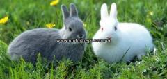 Комбикорма для кролей 1 кг