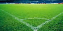 Lawns for sports grounds, a sports lawn