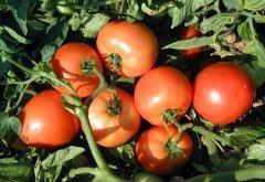 Семена томата Асвон F1 дет. Kitano Seeds...