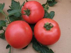 Семена томата ВП-1 F1 VP-1 F1 индет....