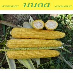 Семена кукурузы Добриня F1 Lark Seeds...