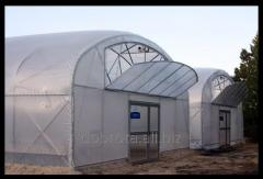 "Film greenhouses ""Kindness"
