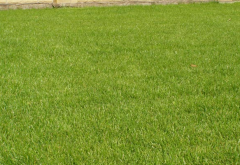 Rolled lawn
