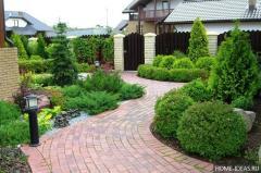 Rnamental shrubs
