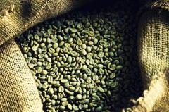 Зеленый кофе робуста Cameroon, scr 16-18