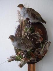 Effigy of a gray partridge