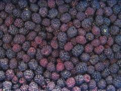 The blackberry frozen