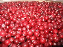 Cranberry fresh wholesale (Box)