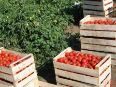 Ящики и коробки тарные деревянные  (067) 9500386