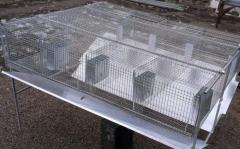 Cages for rabbits metal