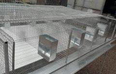 Cages industrial for rabbits