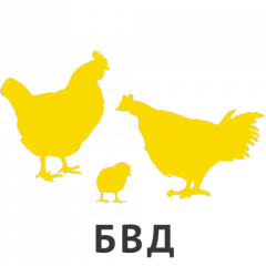 % BF-32 KM BVD for broilers age of 23-42 days P