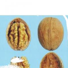 Саженцы грецкого ореха сортовые Клишкивский