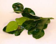 Листья лайма (каффир)