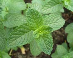 Mint AGROFUDS Company