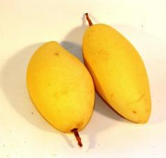 Mango yellow Thailand