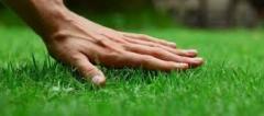 Живые изгороди из вечнозеленых и листопадных кустарников и деревьев