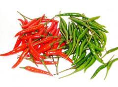 Chili pepper Thai