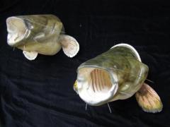 Effigies of fishes