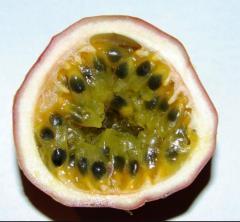 Passion frui