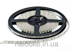 The LED tape SMD 3528 120 for IP33 m, the white
