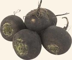 Семена  Редьки сорта  Чёрная зимняя-Сквирская