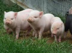 Добавки кормовые для животноводства Витаминные