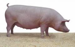 Добавки пищевые для животных Витаминные комплексы