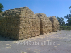 Hay of a Sudanese grass